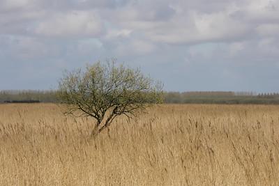 2010-04-xx Lauwersmeer