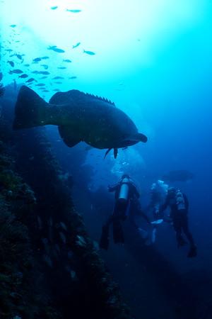 2021-08-28 Loggerhead Wreck & Reef