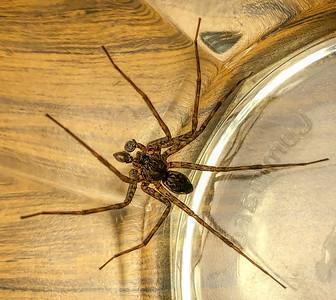 06-16-2020-spider