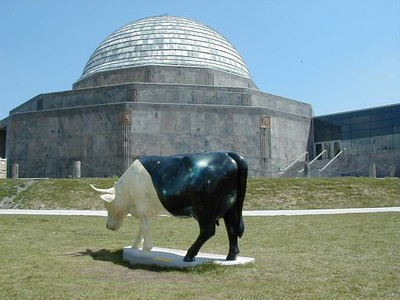 Cow Into Moon CHI238