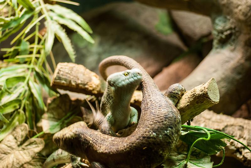 lizard fight-2.jpg