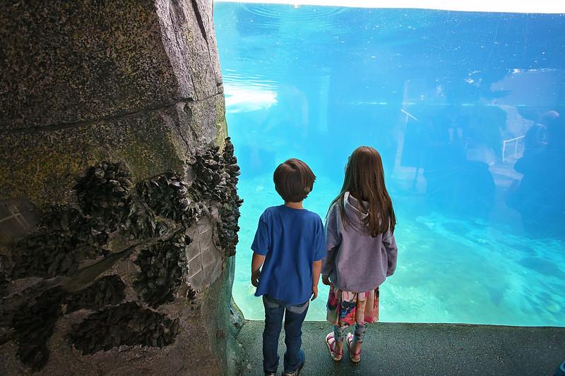TripAdvisor Mystic Aquarium3-2.jpg