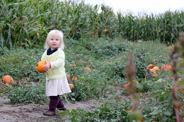 Lawing Pumpkin Patch