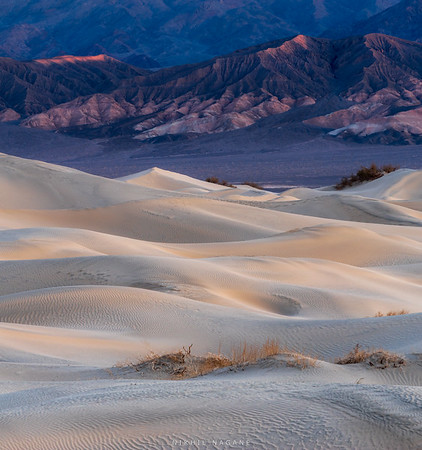 Portraits of Sand