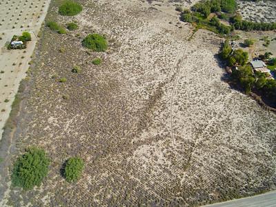 Agave drylands grow