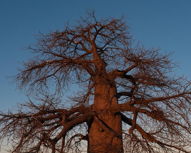 Botswana-07049-2.jpg