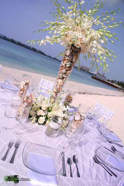 White Orchids and Shells.JPG