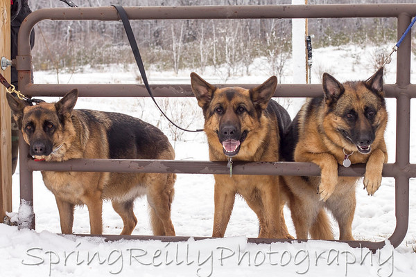 Bronte Creek-GSD's