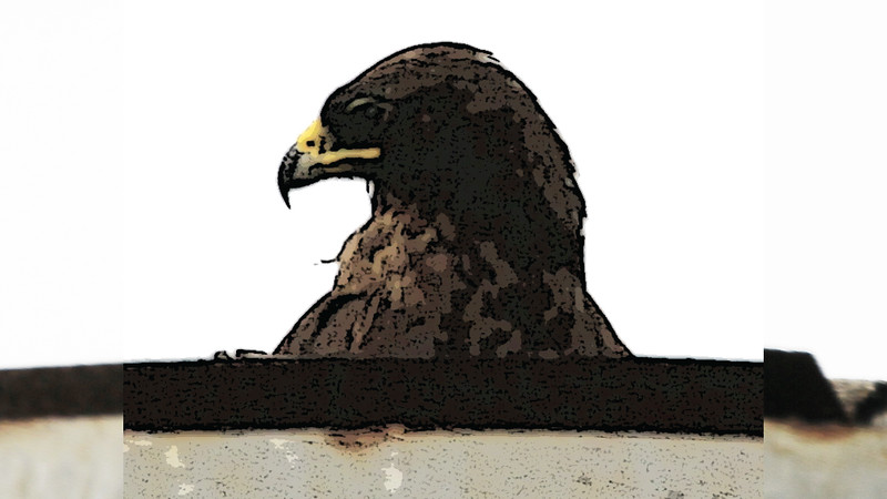 Eagle 2 by Mike.jpg
