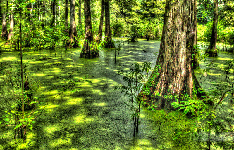 Southern Illinois Cypress SwampDSC_8225_6_7_tonemapped.jpg