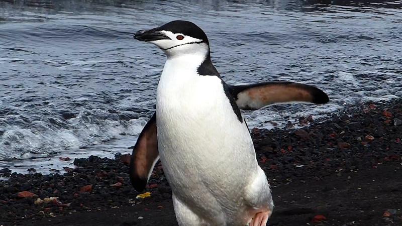 Melissa, Penguin Whisperer