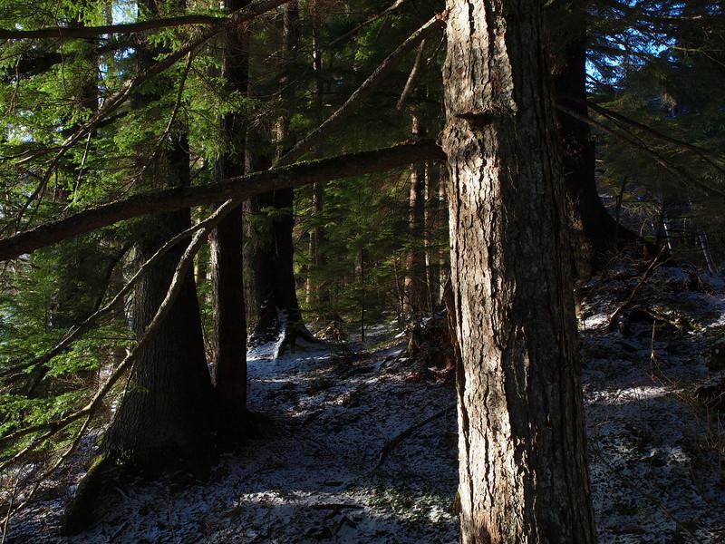 Auke Rec trees.