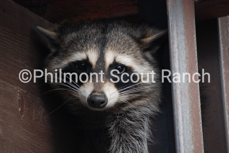 2ndAnimals_2019_Animals and Wildlife_SpencerHarsh_Rocket in Rafters_Outfitting_27.jpg