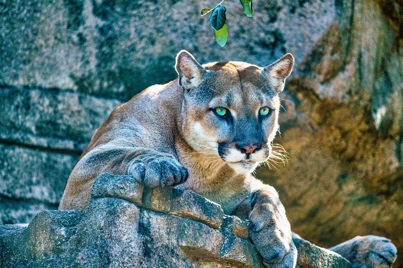 Lion 2 lg.jpg