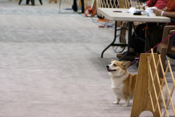 Seattle Dog Show, 2012