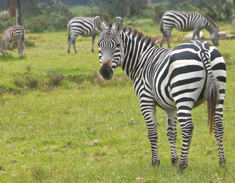 Kenya - 34.jpg