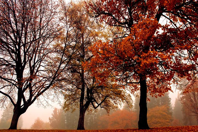 Foggy_Park_HDR8.jpg