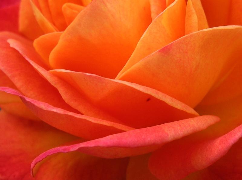 sundayfloraapr9.jpg