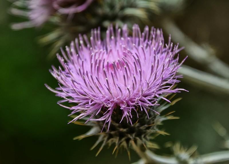NEA_1876-7x5-Flower.jpg