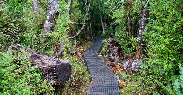 Ridge Track Kaitoke Regional Park