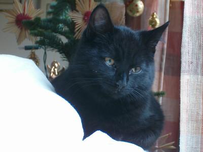Blackie at Home
