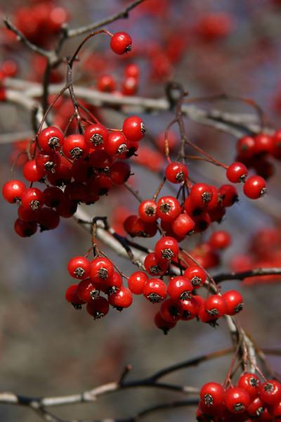 Berries 7 097.jpg