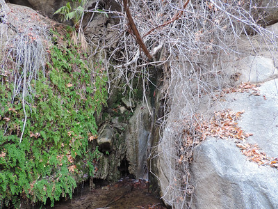 Maidenhair Falls 1-26-2014