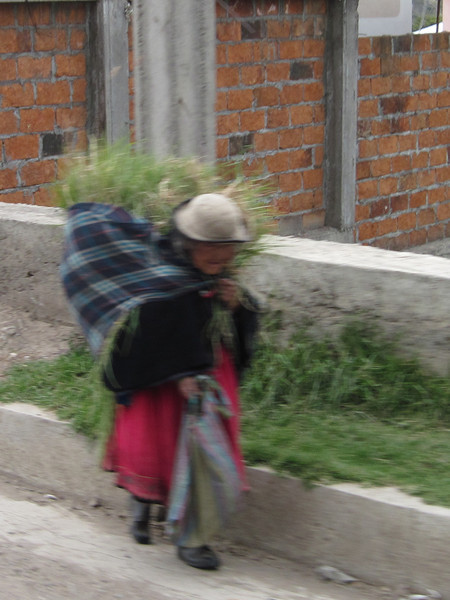 Ecuadorian Woman Carrying a Load on her Back
