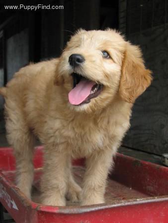 PuppyFind.com,398828