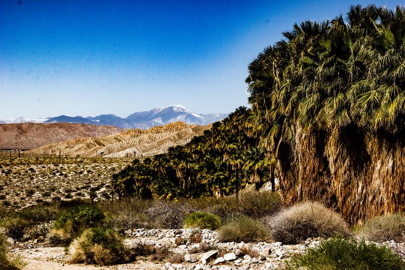 coachella-valley-preserve.2.23.2020.v1.jpg