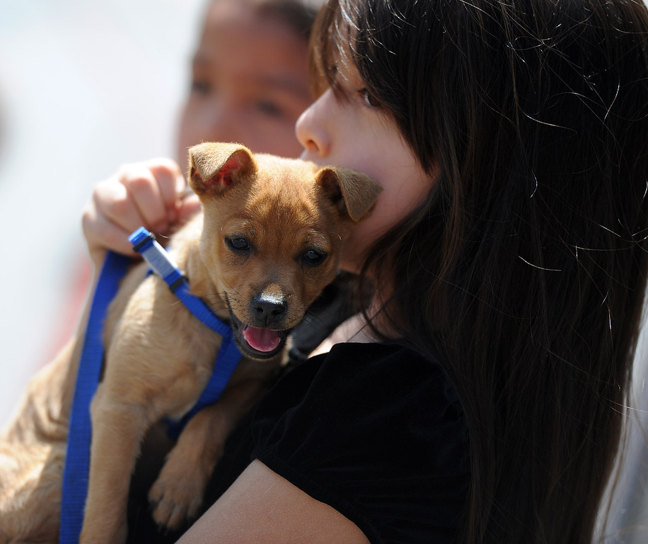 . A dog and owner waits for Father Paul Sustayta to bless him during the traditional Blessing of the Animals at St Andrew Church School on Saturday, March 30, 2013 in Pasadena, Calif.  (Keith Birmingham Pasadena Star-News)