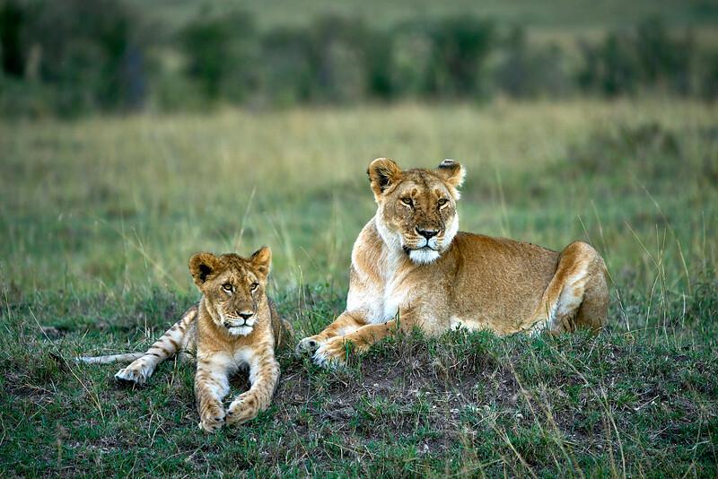 Maasai Mara_DSC08551.jpg