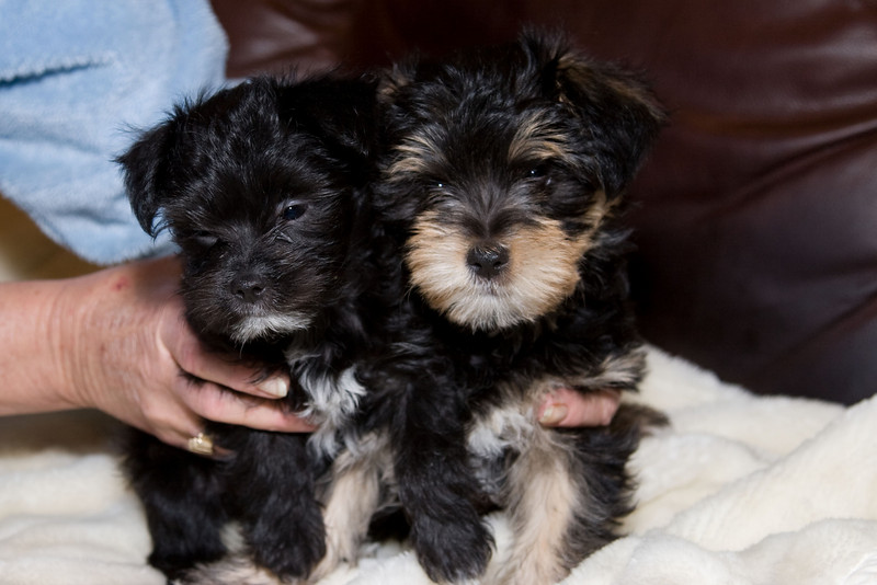 Sammy and Lexi