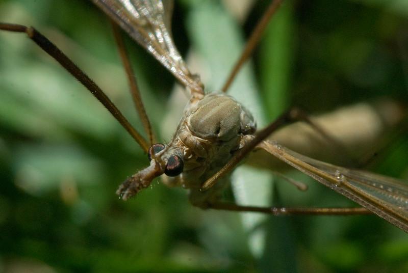 Friday Bug Walk-3.jpg