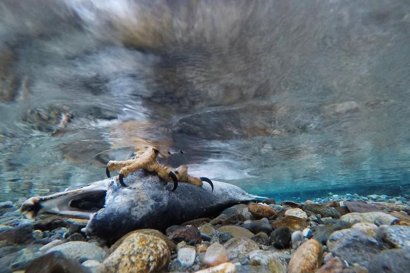 Chilkat GoPro85008.jpg