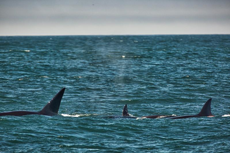 Whale watching off Monterey Coast2017-09-20 (3).jpg