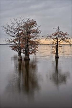 Caddo Lake Color