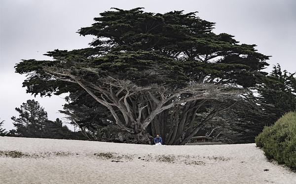 California road trip 2016: Monterey
