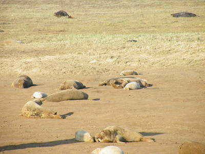 Donna Nook Grey Seal Colony
