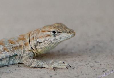 Wildlife - Reptiles