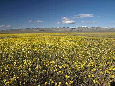 Carrizo Plain - Caliente Mountain 3.21.09
