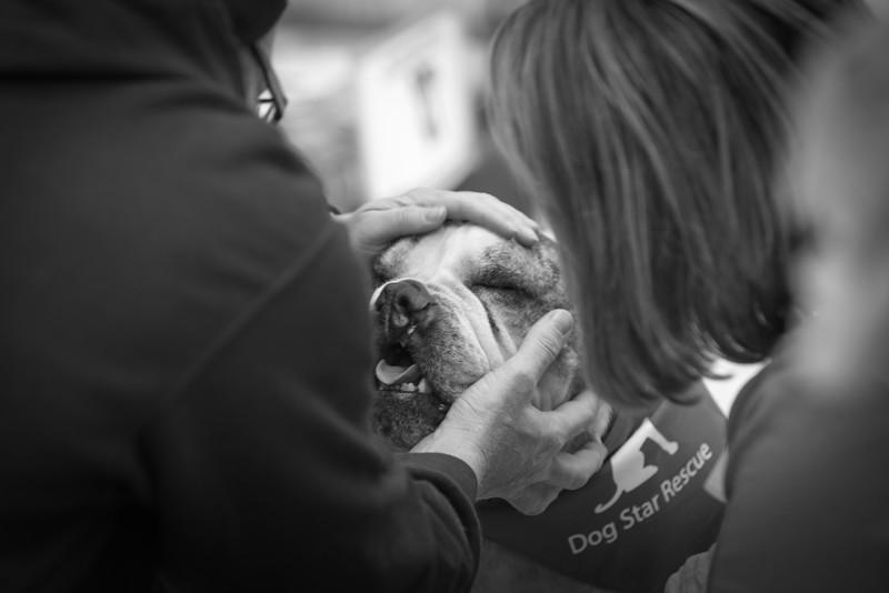 Dog Star Rescue Valentines Adoption Event