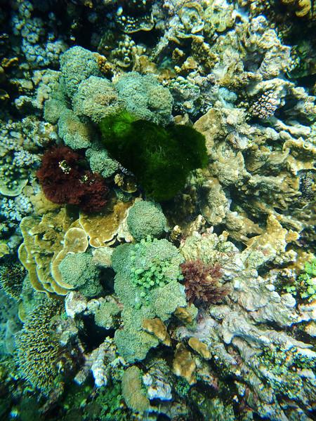 Lord Howe20080511 090638.jpg