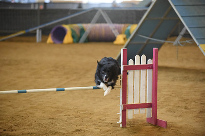 Tail Blazers AKC Agility Trial September 10-11