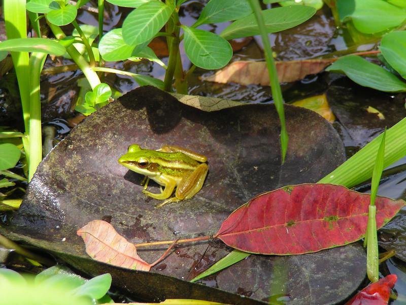 Sungei Buloh Wetland Reserve, Singapore