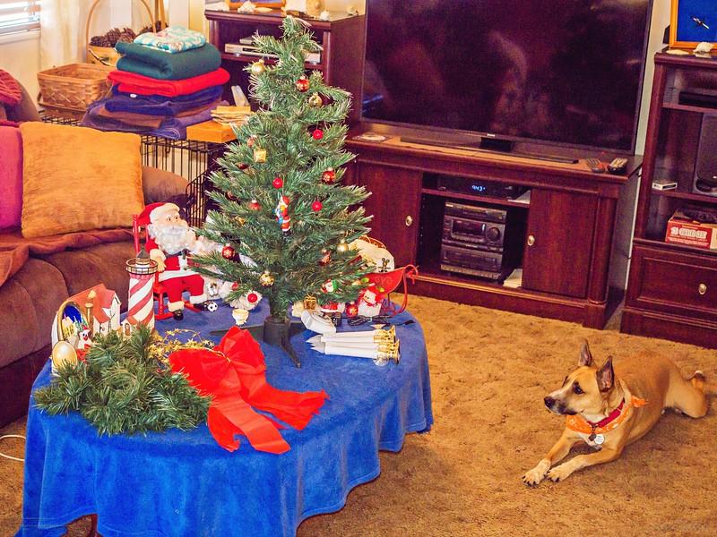 _1050040_  pl5 12x40 christmas take down,tip,paws,mal,mov.jpg