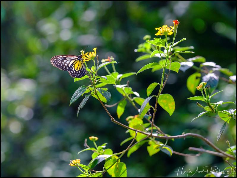 200104 KL Butterfly Park 29.jpg