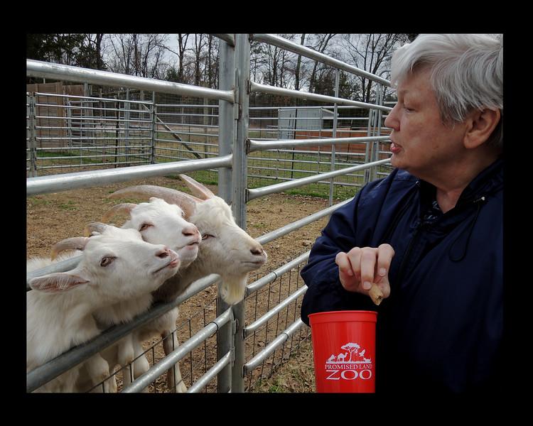 Disciplining Goats - Arkansas - 2015.JPG