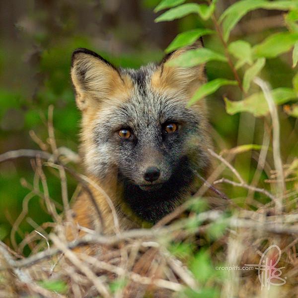 sm fox kit_M4D8957.jpg
