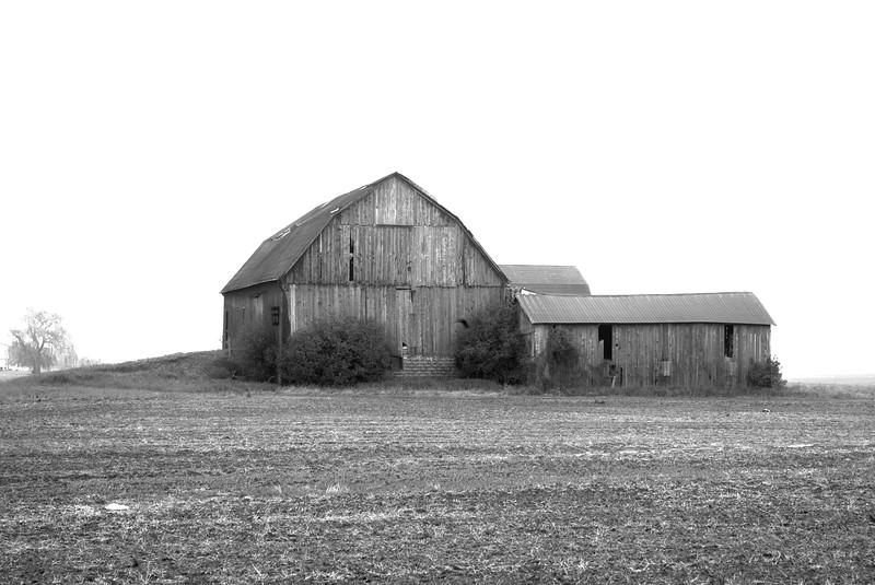 Rural Foggy Morn, Hwy 3 SW Ontario